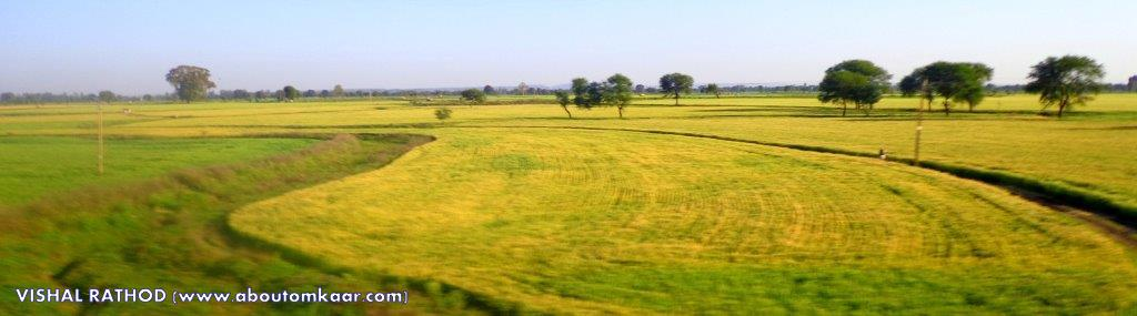 Greenery in Madhya Pradesh Travel India