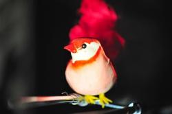 Wir haben alle einen Vogel...