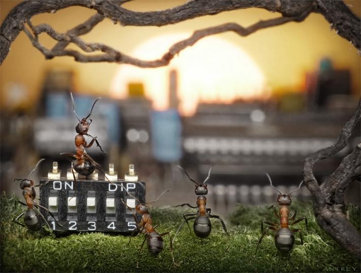 Imagem de Formigas  avires seca