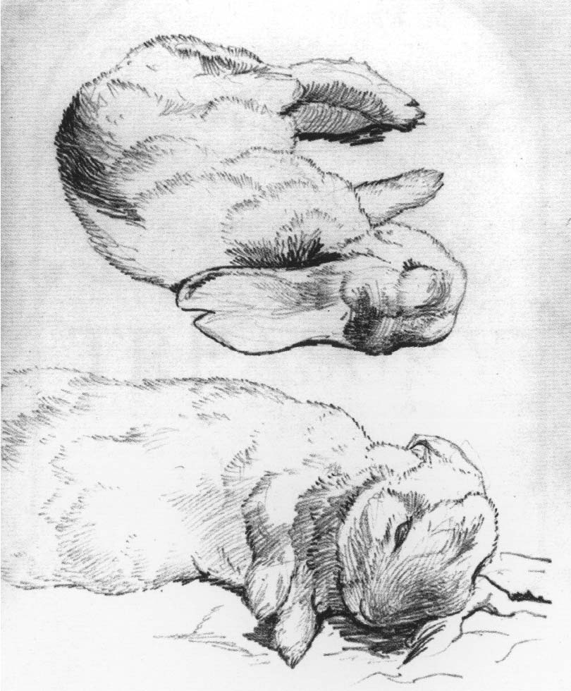 how to draw a dead rabbit