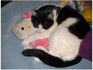 Pet cat cuddling Hello Kitty plush soft toy