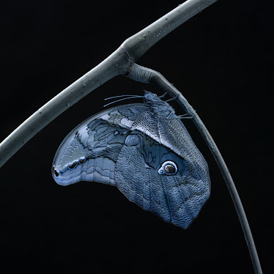 2011 International Photography Award Winners Seen On www.coolpicturegallery.us