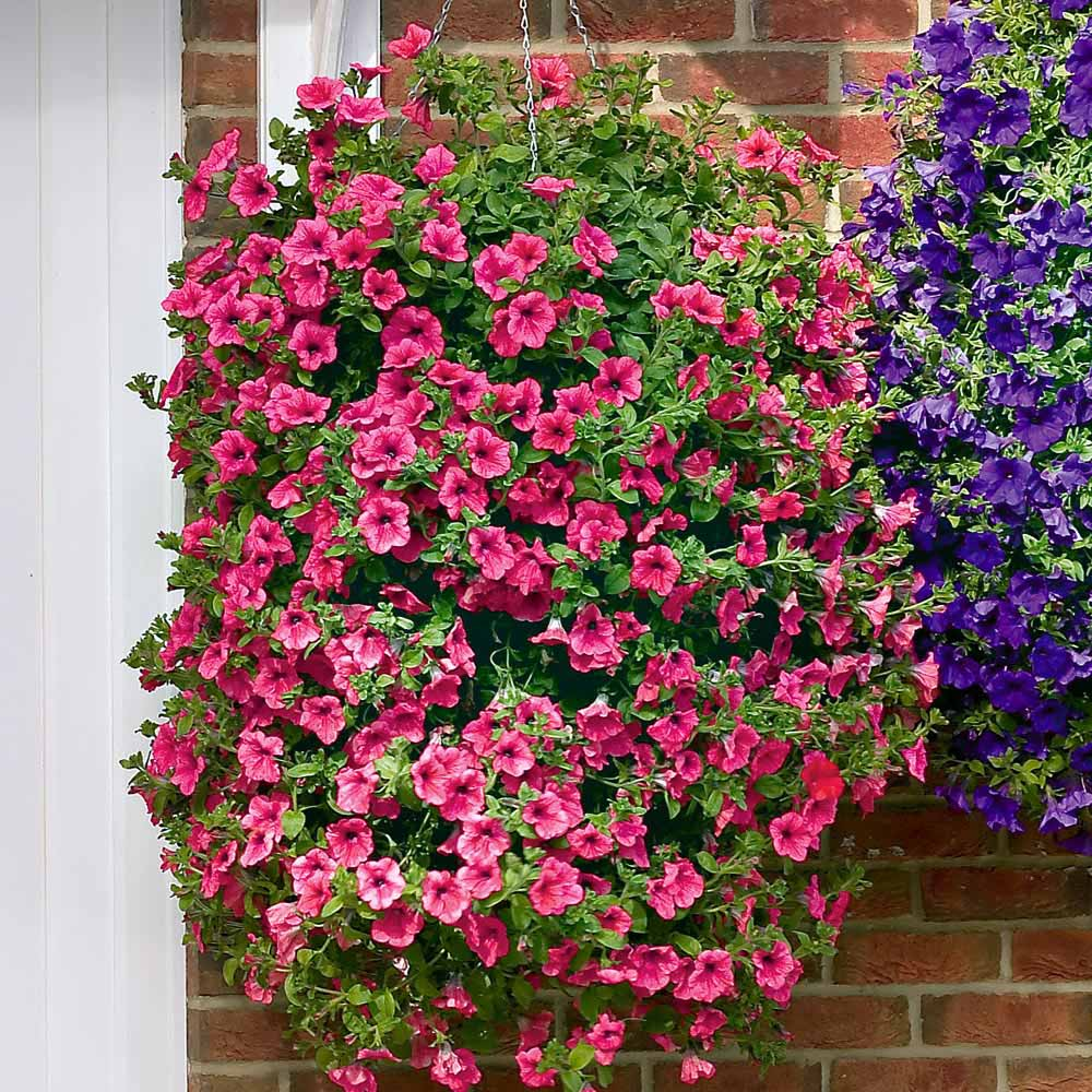 martes de junio de with plantas colgantes de exterior - Plantas Colgantes Exterior