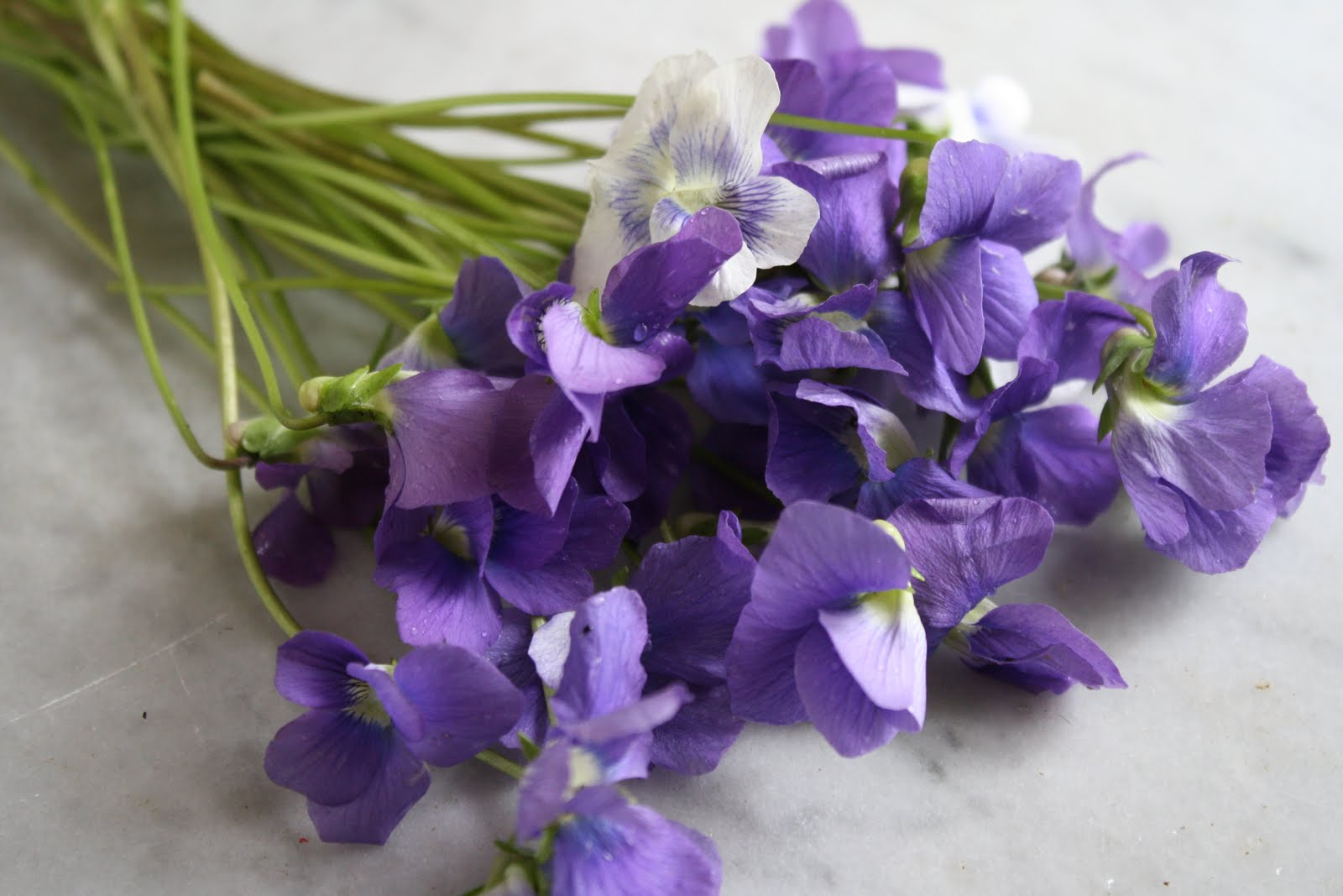the violets Violet is the sixth color of the rainbow--it is the color on the inner edge of the rainbowviolet is the color between blue and purplethe name of the color comes from the violet, which is a.