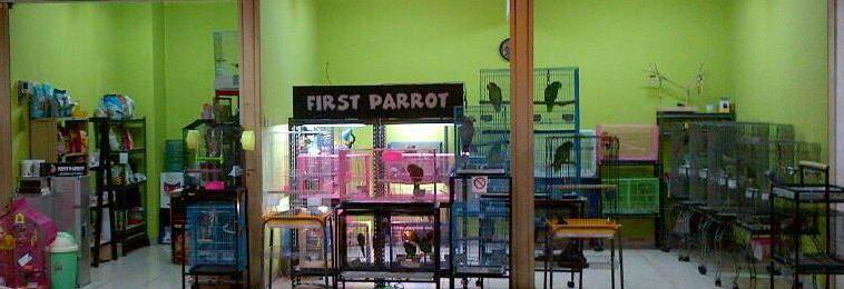 First Parrot
