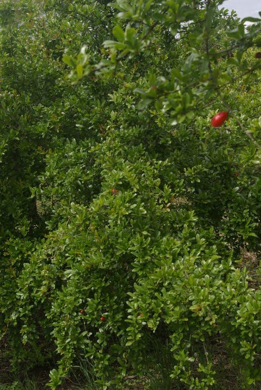 Agricultura ecológica: Campo de la Sort de Bullentó y Closa ...