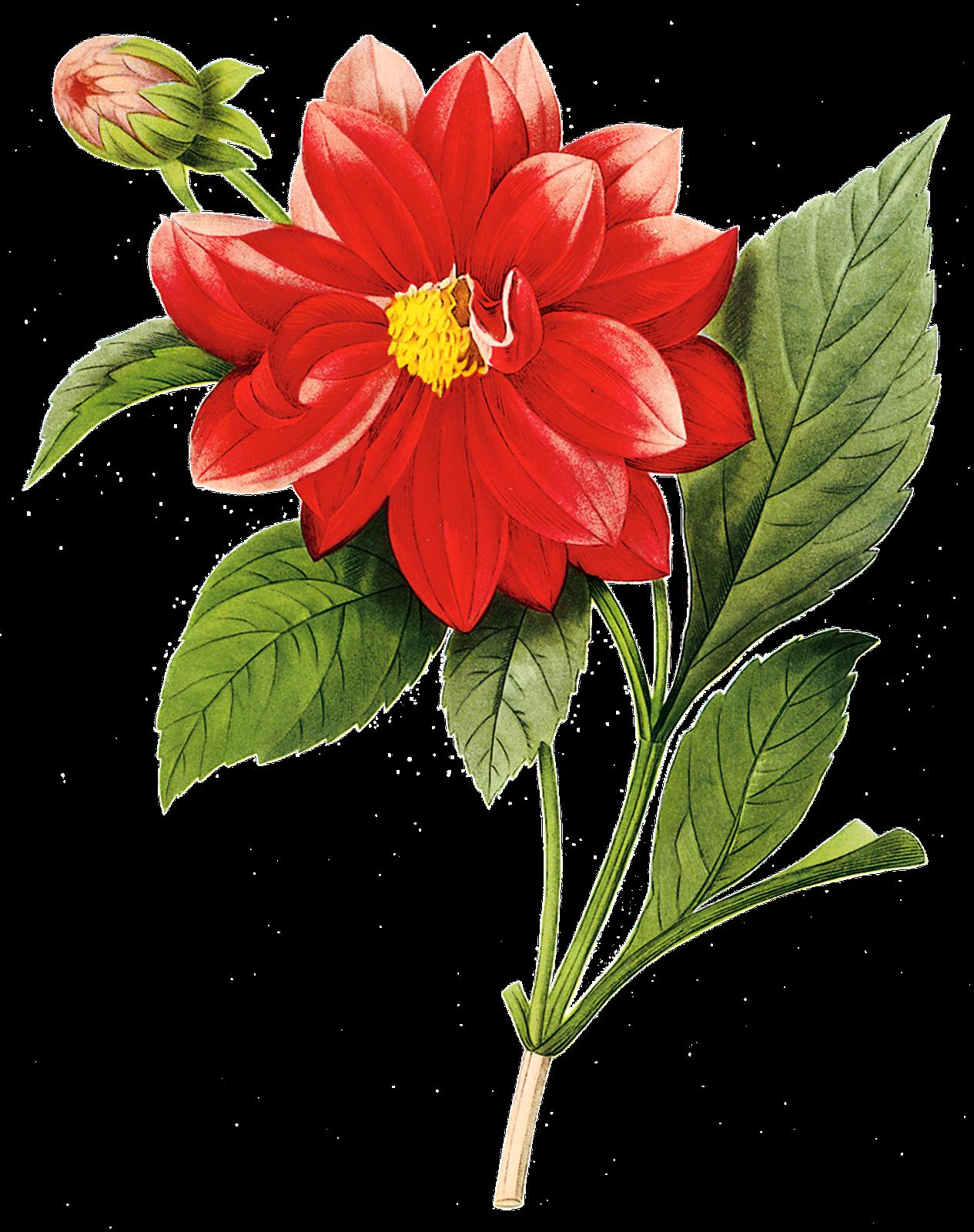 Imagens PNG - flores #2 | Central Photoshop