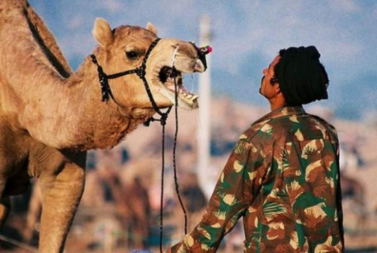 Funny Camel Photos ~ Combine Blog | 550 x 369 jpeg 153kB