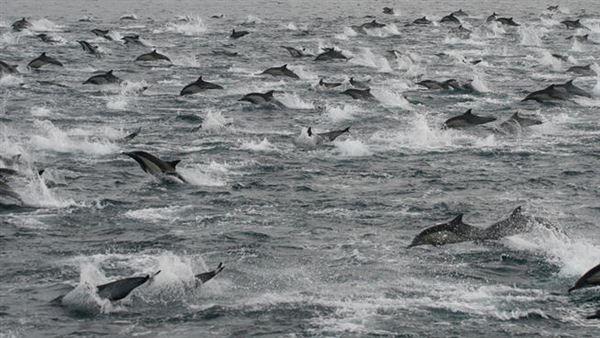 Whale pod jjbjorkman.blogspot.com