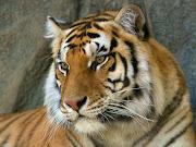 Animales en su habitat natural. Publicado por MARCELA CONROY en 12:09 (animales en su habitat natural )