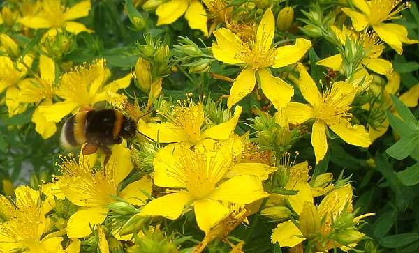 Flores de verano naturaleza plantas - Flores de verano ...