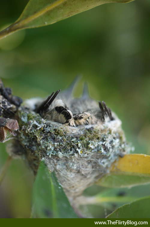 Baby, Hummingbird, Tail, Feathers