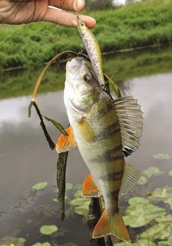 клюет рыба на дону