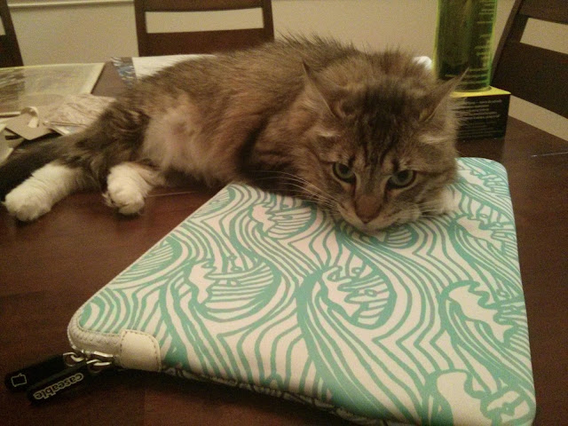 my cat sitting on my pattern laptop case