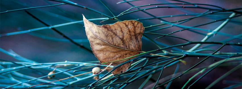 Beautiful Autumn Leaf Facebook Timeline Cover | Facebook Covers, FB ...