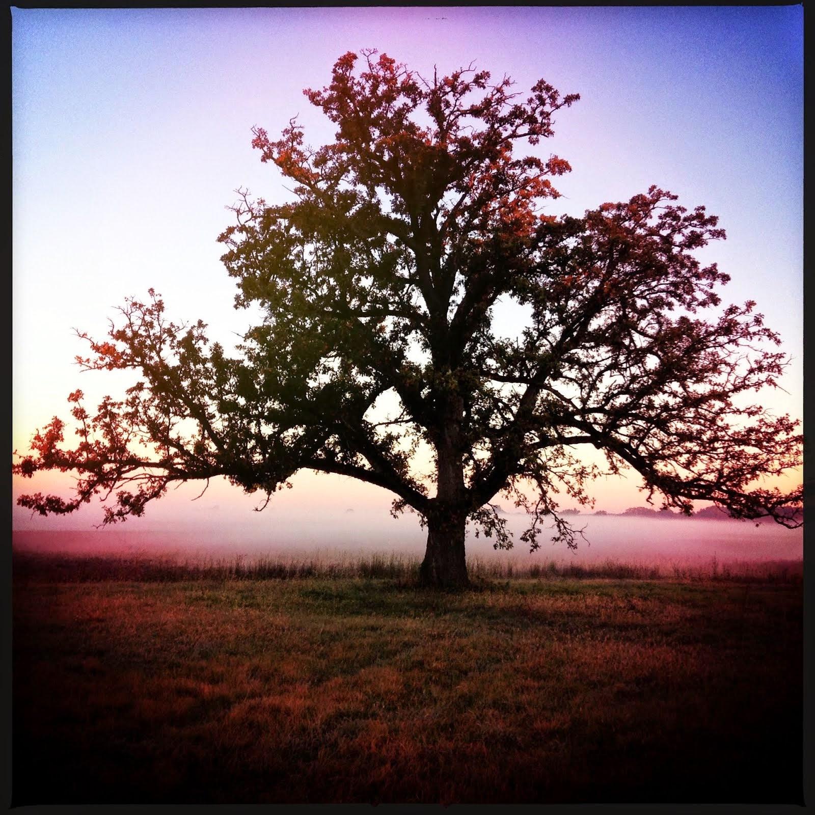 Loveland Oaks