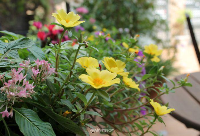 Jardinera llena de color