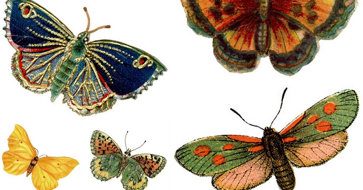 Images d 39 autrefois planche papillons ancien - Modele de papillon a imprimer ...