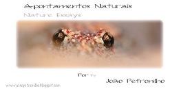 www.joaopetronilho.blogspot.com