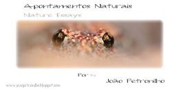 www.joaopetronilho.blogspot.com