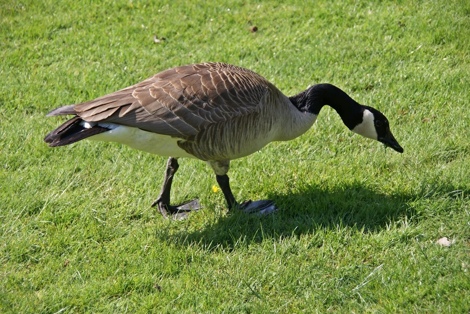 Canada Goose victoria parka online discounts - My Bird Blog: Canada Goose