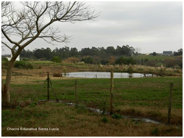 Los pastos reverdecieron gracias a la lluvia - Chacra Educativa Santa Lucía