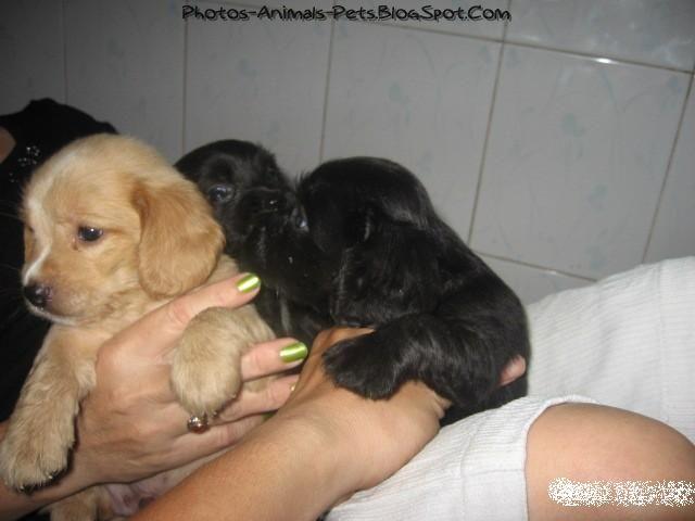 http://2.bp.blogspot.com/-3JWk_KU5BoM/TbA34BfPmTI/AAAAAAAAAtY/-vGbYNZ58eQ/s1600/These%2Bcute%2Bpuppies_0001.jpg