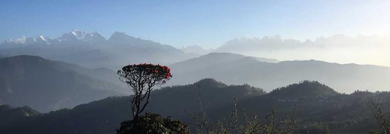nepaltepper