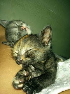 Adoptada per Curecan