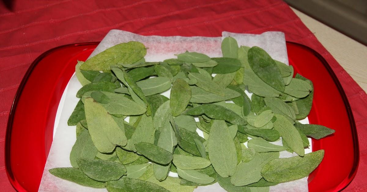 La cucina di alice essiccare le erbe aromatiche la salvia - La cucina di alice ...