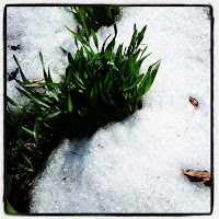 Grass in snow