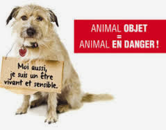code civil animal, Pétition pour un changement de statut juridique de l'animal, statut juridique animal, petition 30millions d'amis