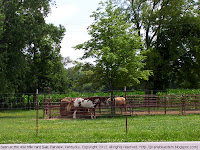 Horses in Fairview, KY
