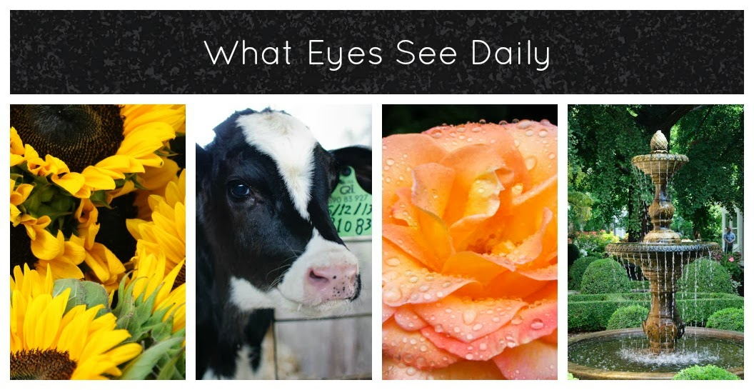 What Eyes See Daily