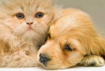 تربية الكلاب وتربية القطط السوداء