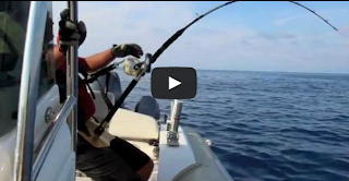 Fishing Big tuna 300kg