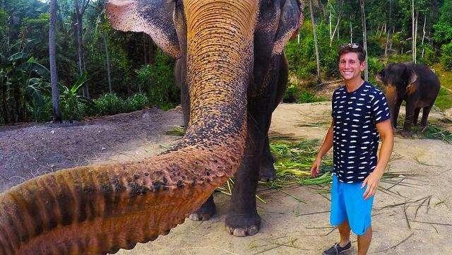 gajah elphie