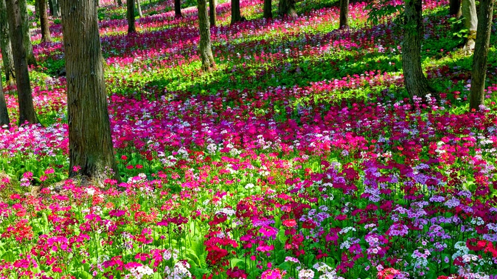 Beautiful garden flowers wallpapers nice pics gallery for Beautiful flower garden pictures