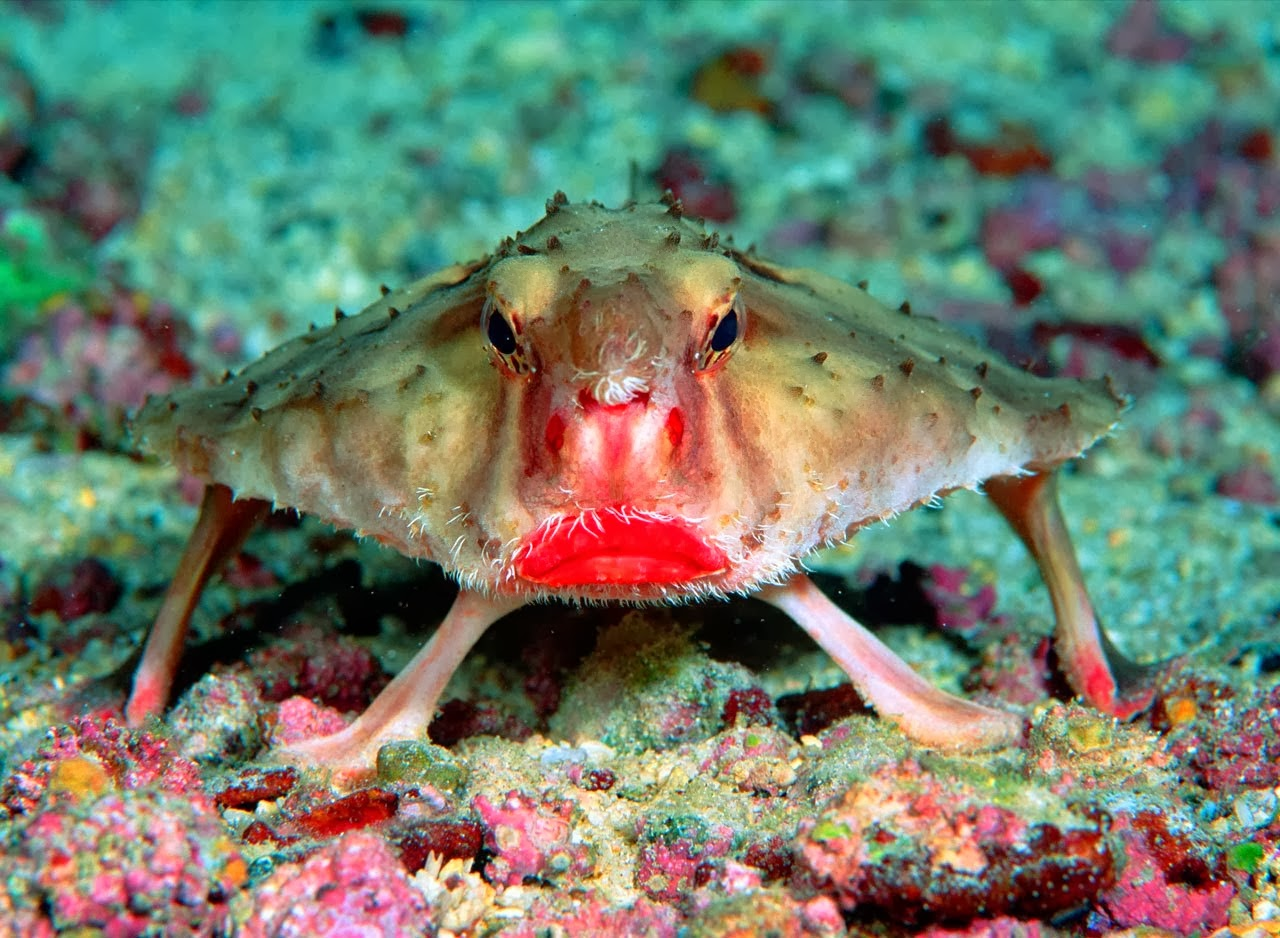 A walking fish with lipstick