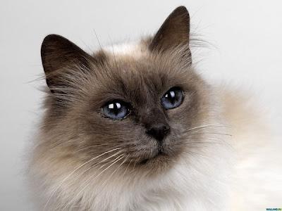 Кошек обижать не следует