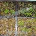 Vermiculite ứng dụng làm vườn và ươm cây tuyệt vời