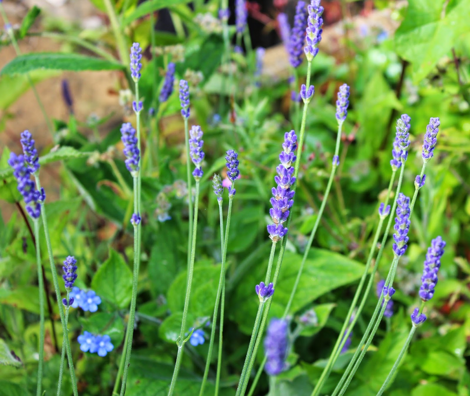 Snapshots of the Garden - How Does Your Garden Grow