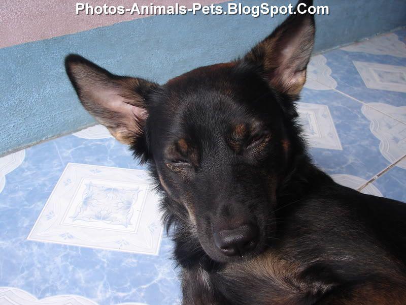 http://2.bp.blogspot.com/-3LhK_1wt5gw/ThsmTNmYFJI/AAAAAAAABpg/LhidvnQSXuM/s1600/Dog%2Bsleeping%2Bphoto_0002.jpg