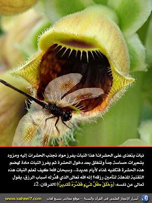 Tumbuhan memangsa serangga