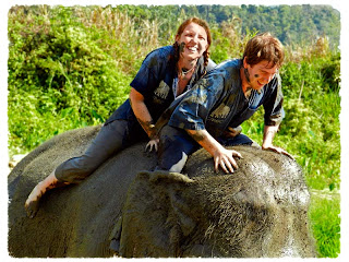 muddy elephant, Chiang Mai Elephant Camp, Thailand