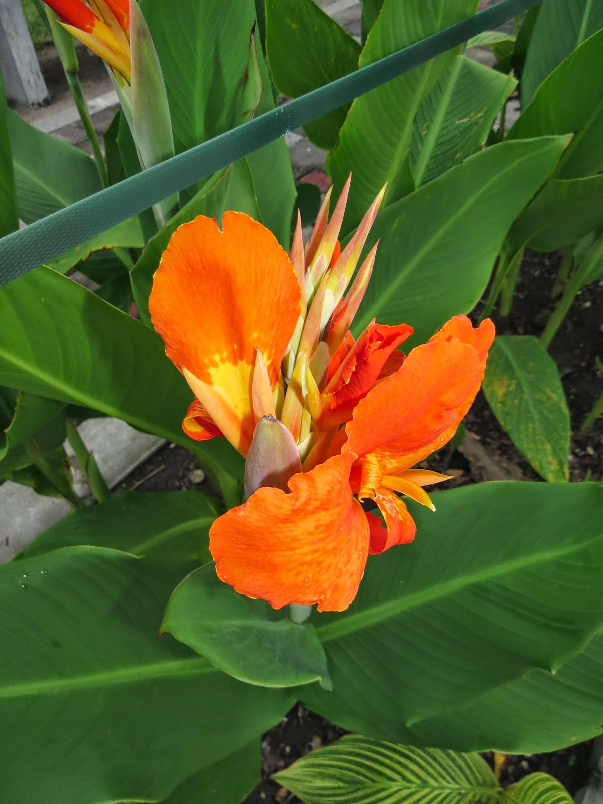 Bunga Di taman Pare Kediri (Foto Admin)
