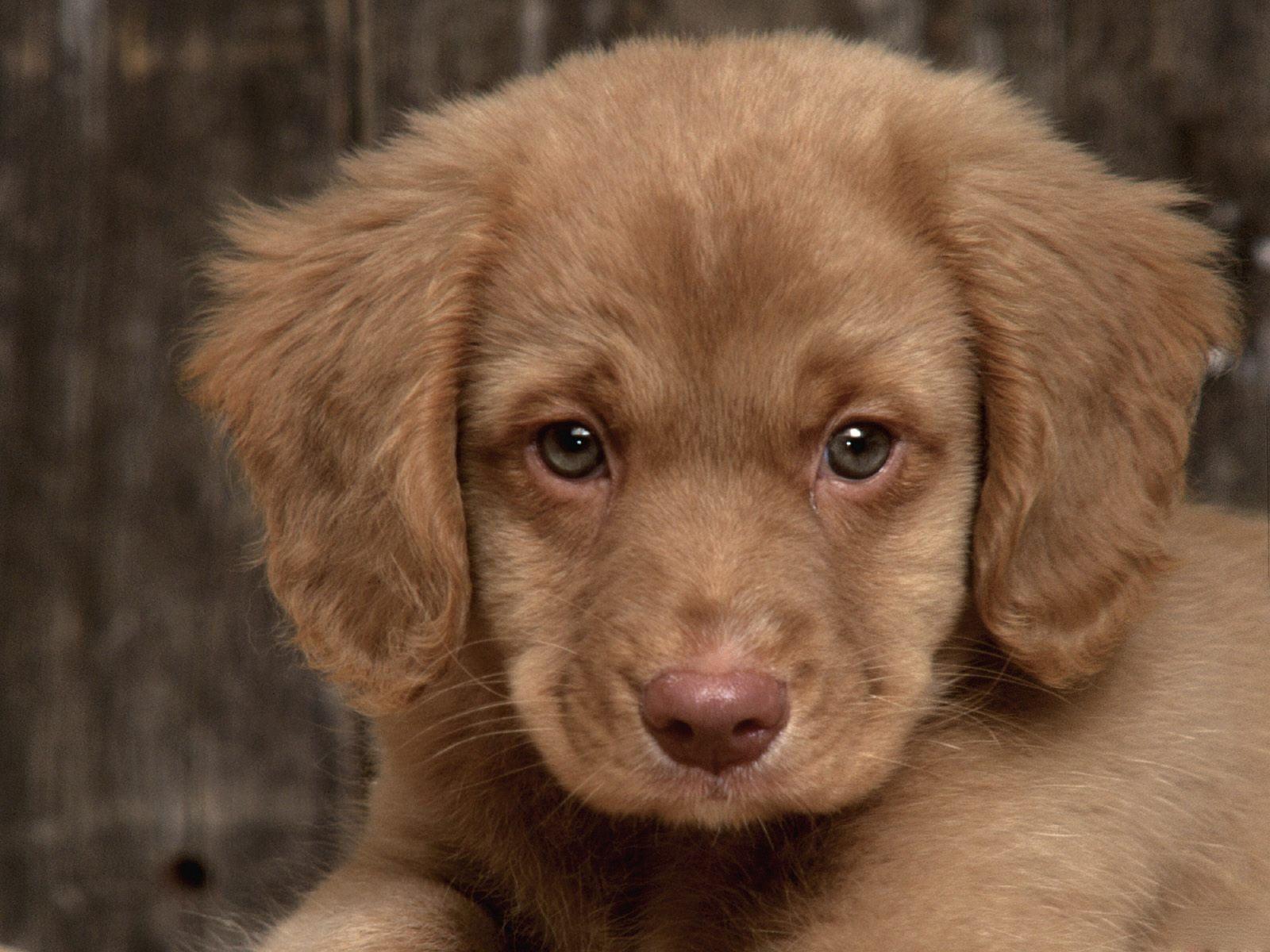 http://2.bp.blogspot.com/-3MUbNQoF19I/UJXoNeifbNI/AAAAAAAASD4/K_yaazR0RAU/s1600/cachorritos+(8).jpg