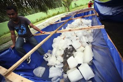 Buaya terbesar mati di Filipina