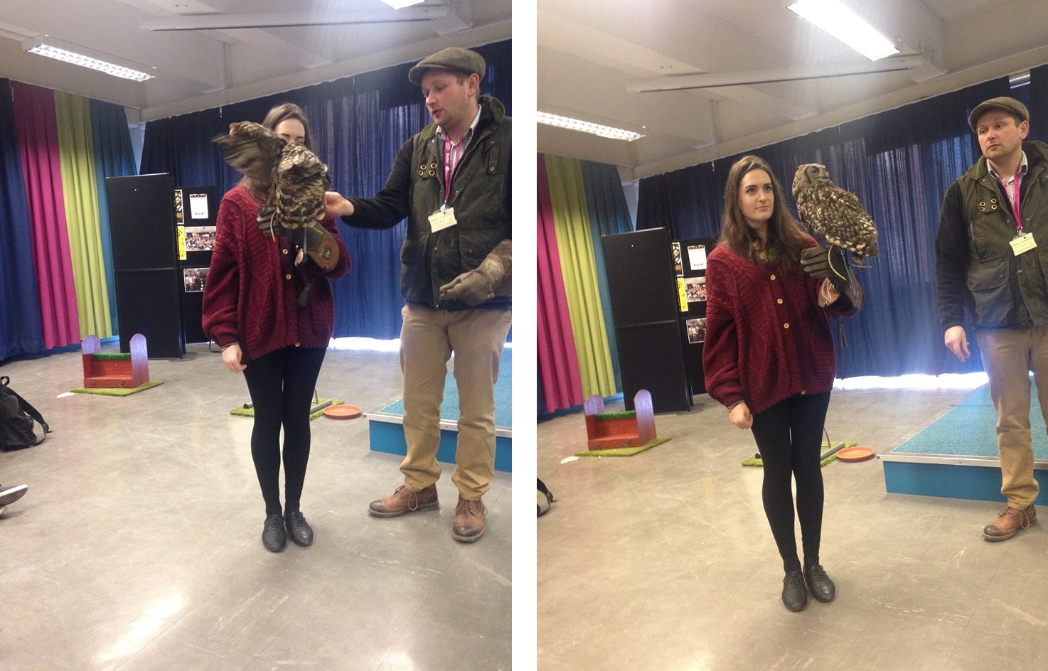 the owl experience