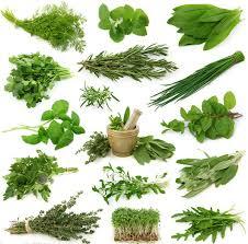 sehat alami dengan herbal